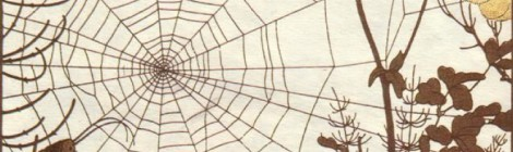 The Spider Story